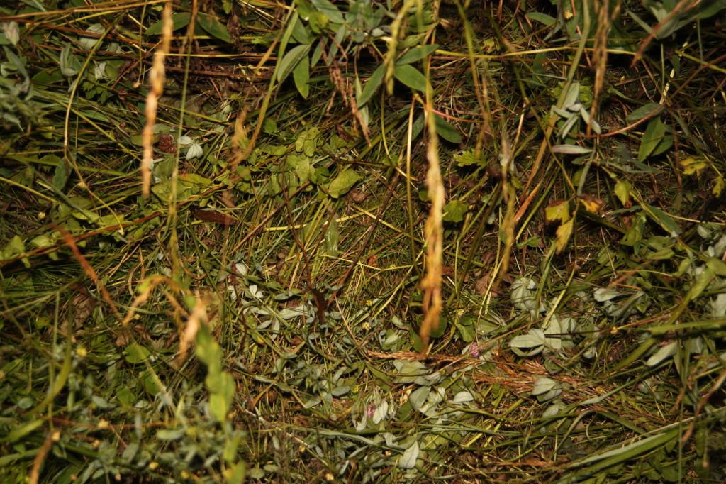 Sběr slimáků na zahradě - Budilka