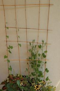 Levná treláž vyrobená doma - Budilka zahradničí