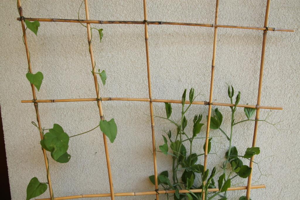jak si doma vyrobit treláž - Budilka zahradničí
